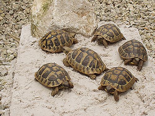 A Vendre Landschildpadden Com
